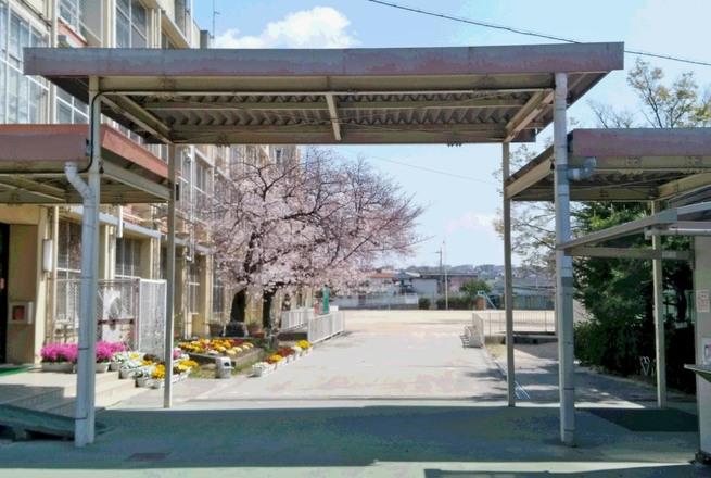 樟葉小学校の桜